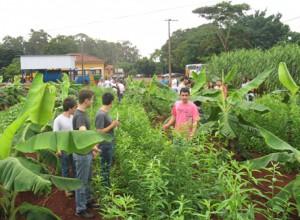 Aula prática Grandes Cultivos - Cultivo intercalar a bananeira
