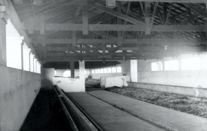 Estábulo Leiteiro do Parque de Exposições, década de 40/50 – atual Laboratório de Genética e Melhoramento Animal do Departamento de Medicina Veterinária (ZMV/FZEA) e Secretaria do Departamento de Ciências Básicas (ZAB/FZEA). Foto: Acervo Digital FZEA.