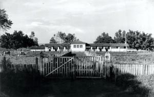 Suinocultura, década de 40/50 – atual Suinocultura da Prefeitura do Campus. Foto: Acervo Digital FZEA.
