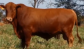 Banner Canal do Boi – Pesquisa e avanço da pecuária nacional
